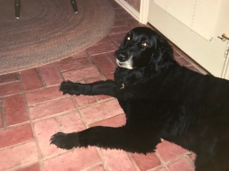 Beau (the dog who bit me, & I still love)